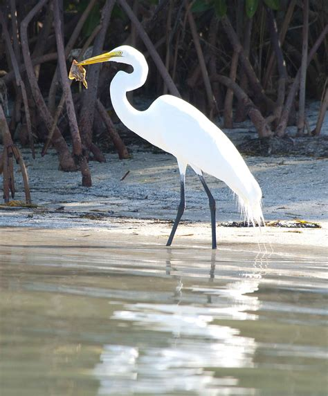birds fishing florida go coastal found there lakewood ranch way fl beak fisherman sea had current central august others better