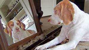 Mirror Mirror On The Wall | The Animal Rescue Site Blog