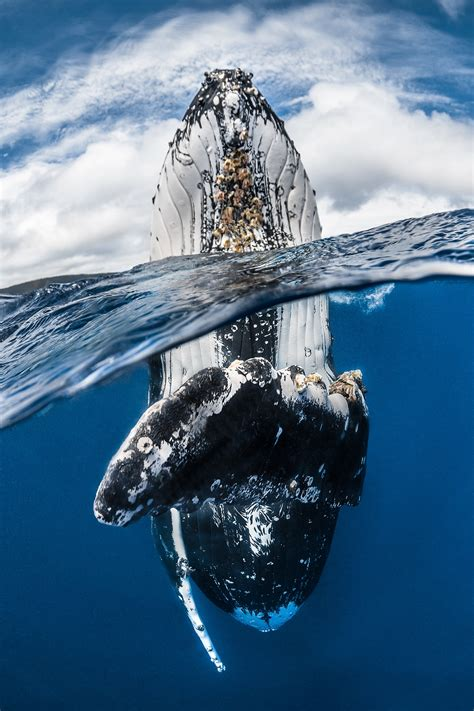 underwater photography winners capture  beauty