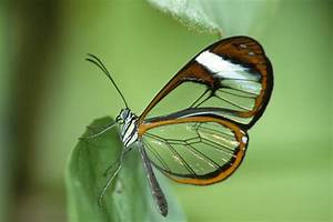 The Most Beautiful Butterfly Wallpapers | Most beautiful ...
