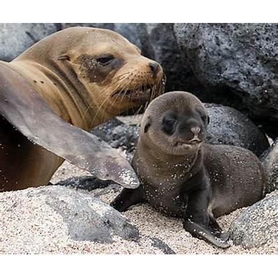 Galapagos Sea Lion and PupFlickr - Photo Sharing!