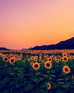 flower, flowers, hippie, hipster, mountains, sunser ...