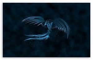 Blue Phoenix 4K HD Desktop Wallpaper for • Wide & Ultra ...
