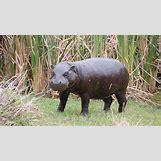 Full Grown Pygmy Elephant | 1280 x 720 jpeg 962kB