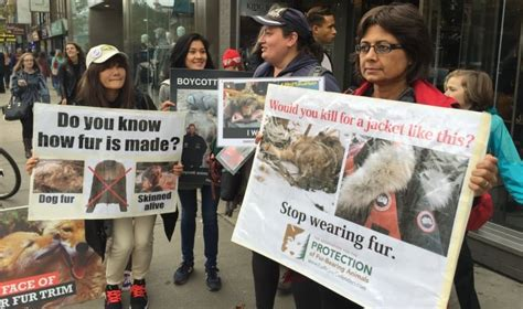 animal rights activists protest   toronto store