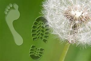 ökologischer Fußabdruck Berechnen : home ~ Themetempest.com Abrechnung