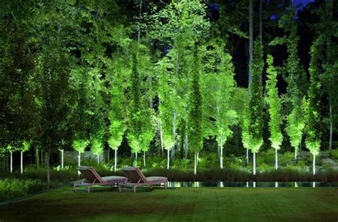 modern trees landscaping stunning what is the name of the tall narrow columnar tree