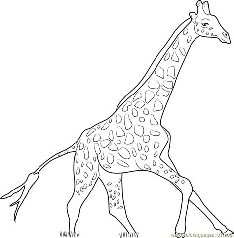 giraffe running coloring page  giraffe coloring