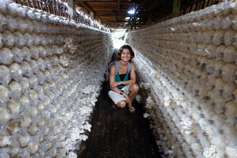 european cuisine oyster mushrooms authentic food