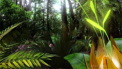 Tropical Jungle Rainforest Forest Wallpapers Scenic Background