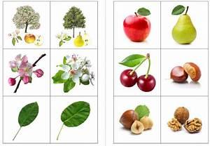 Arbre A Fruit : crapouillotage jeux arbres fruitiers ~ Melissatoandfro.com Idées de Décoration