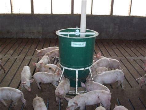 hog feeders for hog feeder livestock supplies info