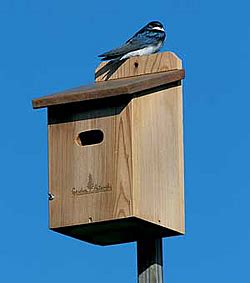 woodwork tree swallow birdhouse plans  plans