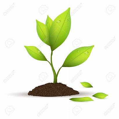 Plant Clipart Tree Plants Growth Sprout Clip