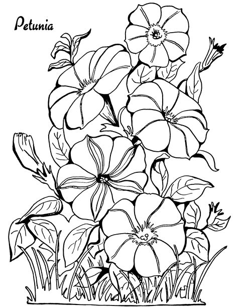 adult coloring page petunias  graphics fairy