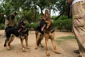 These Police Dogs In Madhya Pradesh Have A Huge Task At ...