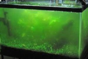 types  algae growth    tropical fish tank