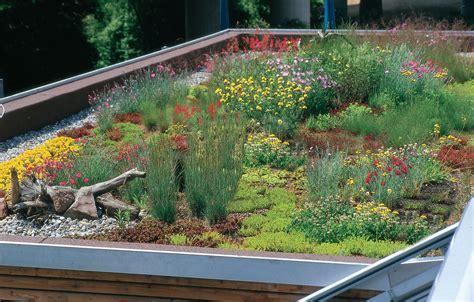 Dachbegruenung Natuerliche Klimaanlage by Dbu Erinnert F 246 Rderung Umweltfreundlicher Dachbegr 252 Nungen