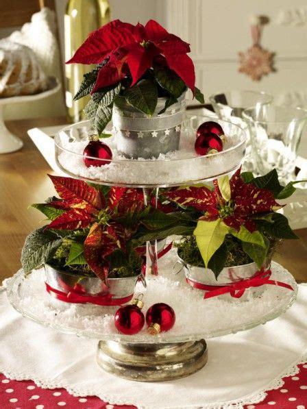 weihnachtsstern pflanze deko mini weihnachtssterne auf der etagere weihnachten