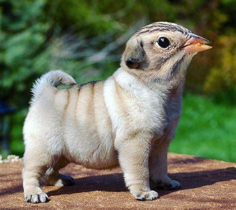 fotomontajes de animales hibridos