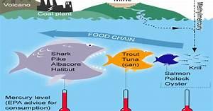 Tropical Food Chain Diagram