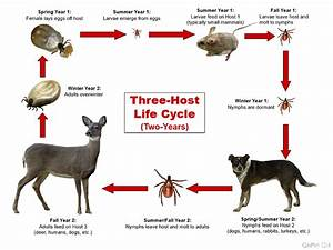 Tick Biology