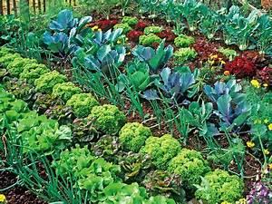 Gemüsegarten Anlegen Beispiele : mischkultur einfach erkl rt mit beispielen tolle ~ Lizthompson.info Haus und Dekorationen