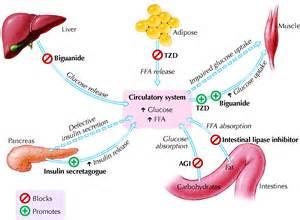 ... Mellitus, Type 2. Causes, symptoms, treatment Diabetes Mellitus, Type  Diabetes Tolazamide