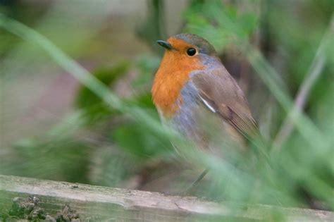 feeding birds in summer gardenersworld com