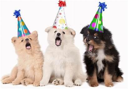 Birthday Happy Dog Wishes Singing Dogs Funny