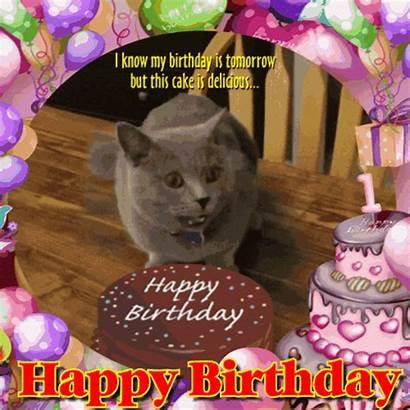 Birthday Tomorrow Cat Happy Cats Greetings Ecard