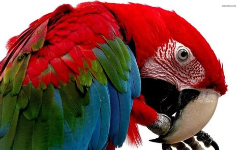 incredibly colorful animals youve