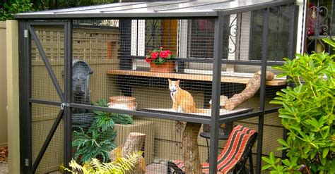 keep your cat safe and happy with catio spaces home