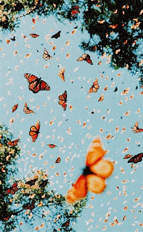 butterfly wallpaper pinterest aesthetic