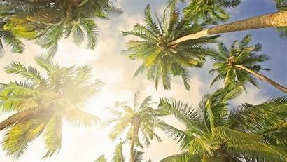 Palm Tree Desktop Backgrounds Wallpapers Replanting Rejuvenation