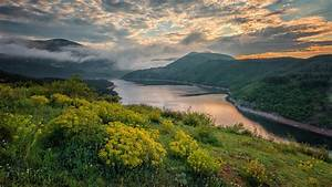 River, Between, Yellow, Flowers, Plants, Slope, And, Green, Trees