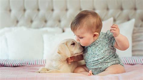 lapin cuisiner bébé et les animaux de compagnie