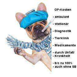 uelzener hunde op versicherung tel