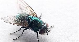 Fliegenplage Im Haus : 8 mittel gegen fliegen und 3 selbstgebaute fliegenfallen haushalt ze pinterest ~ Eleganceandgraceweddings.com Haus und Dekorationen