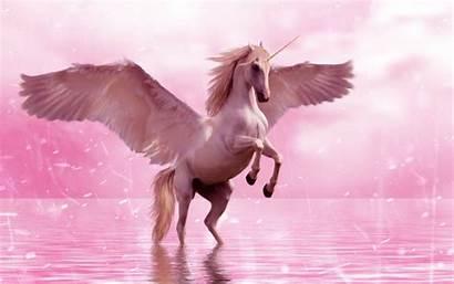Unicorn Horse Wings Pegasus Fantasy Laptop Wallpapers