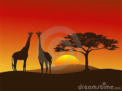 giraffe silhouette  stock photo image