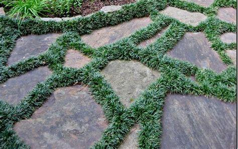 Buy Dwarf Mondo Grass Plants