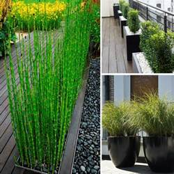 privacy plants backyard privacy tips living outdoors