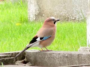 Vogel met blauw
