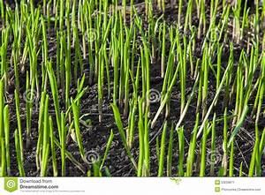 Comment Planter Du Muguet : comment pousse le muguet photo de fleur une pensee fleuriste ~ Melissatoandfro.com Idées de Décoration