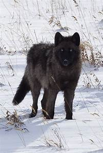 Black Beauty   Animal Spirit Guides   Pinterest   Grey ...