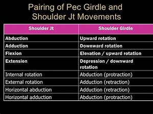 Pectoral Girdle and Shoulder