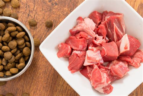proteins  raw food diets  dogs petmd
