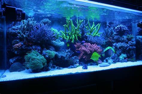 led pour aquarium eau de mer pour aquarium eau de mer 28 images meilleur prix r 233 servoir de poissons led aquarium lumi
