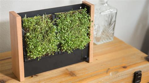 Vertical Garden Maintenance by Ecoqube Frame Best Vertical Garden For Veggies